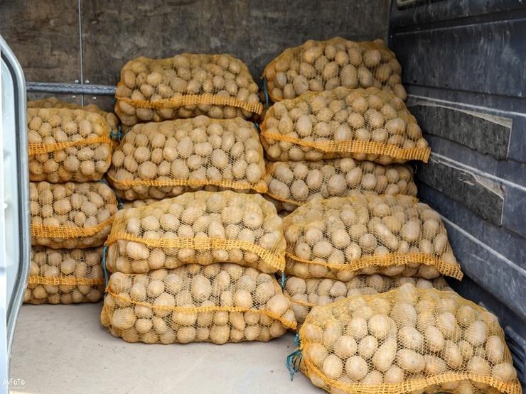 Madona svin kartupeļu svētkus 291919