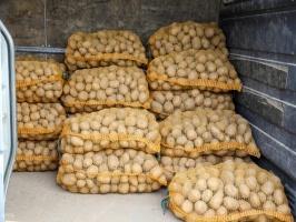 Madona svin kartupeļu svētkus 55