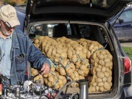 Madona svin kartupeļu svētkus 67